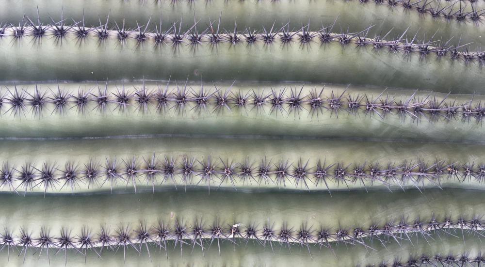 Saguaro_Sideways